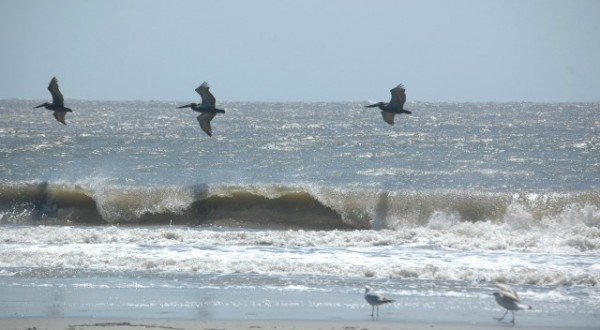 Birds on St Simons