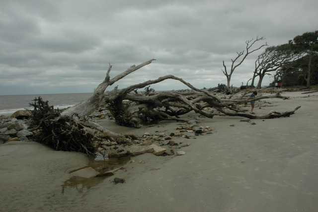 Driftwood Beach on Jekyll Island
